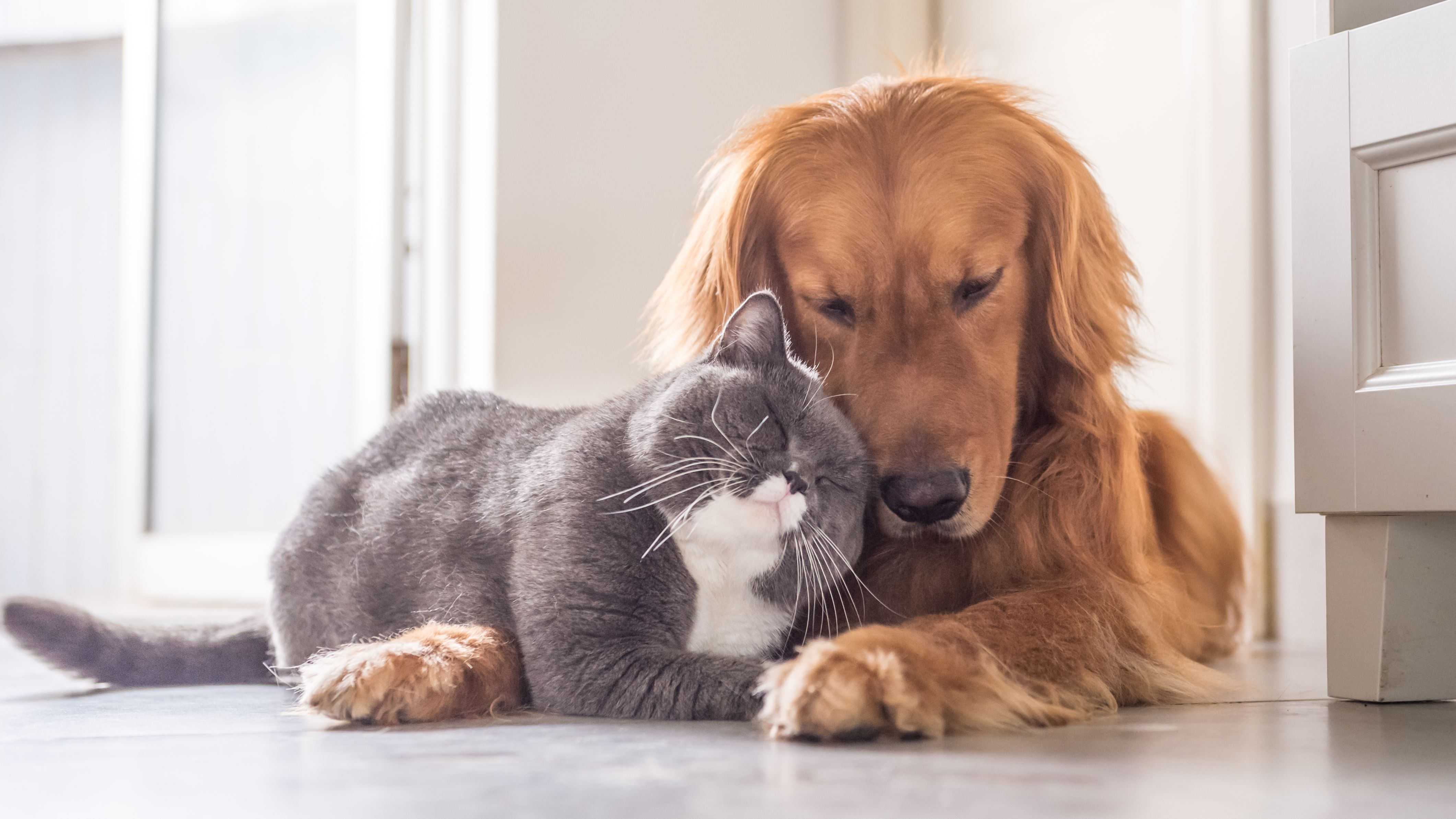It Turns Out Cats And Dogs Get Along Just Fine