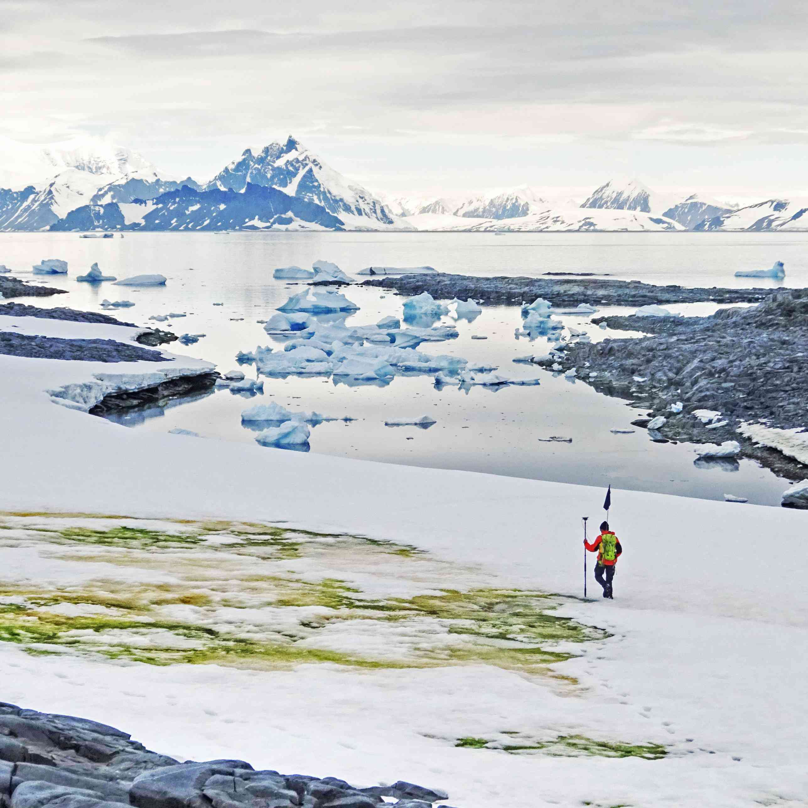 A scientist overlooks green snow in the Antarctic.