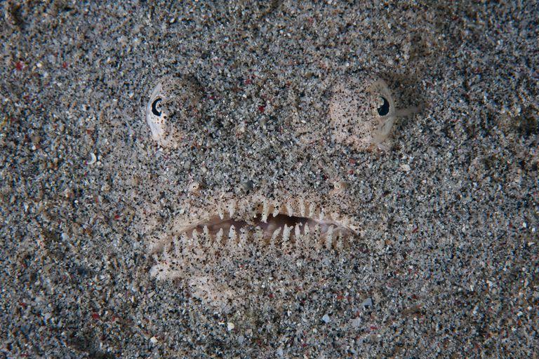 El pez de tus pesadillas acecha en las arenas de Virginia Beach