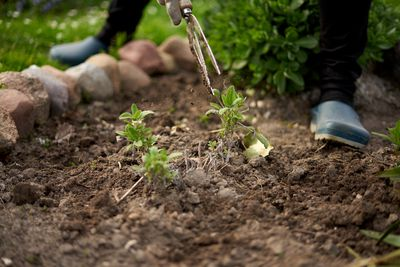 person in gardening clogs and shears crouches down in rock-lined soil garden