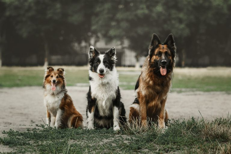 Dogs standing on grass