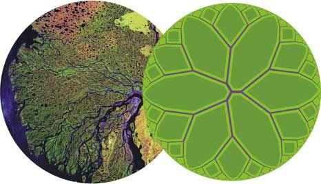 Teoría Constructal: Introducción a la Inversa de Biomimetismo