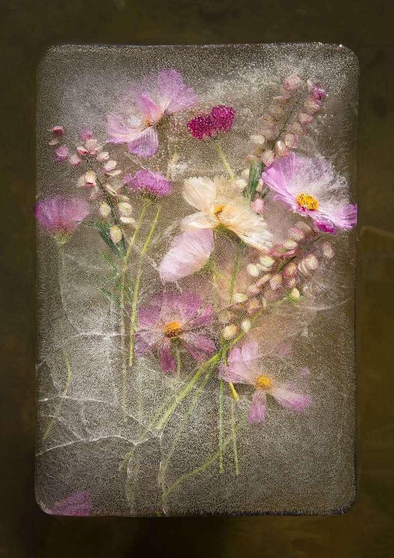 Las flores congeladas ponen hielo en los clichés de la fotografía
