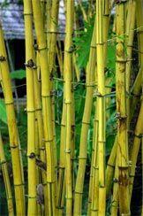bamboo-green-01.jpg