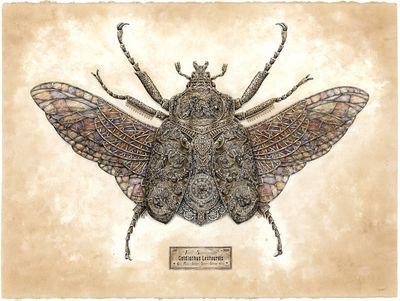 precious littles insect art series Steeven Salvat