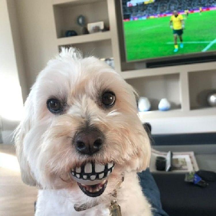 dog with funny teeth