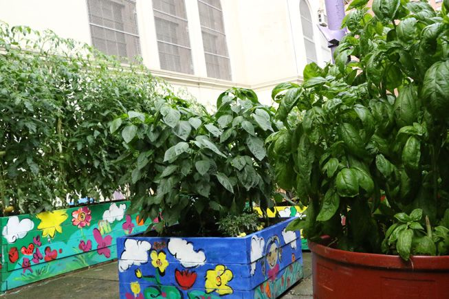 Plants growing outdoors as part of the Green Bronx Machine project