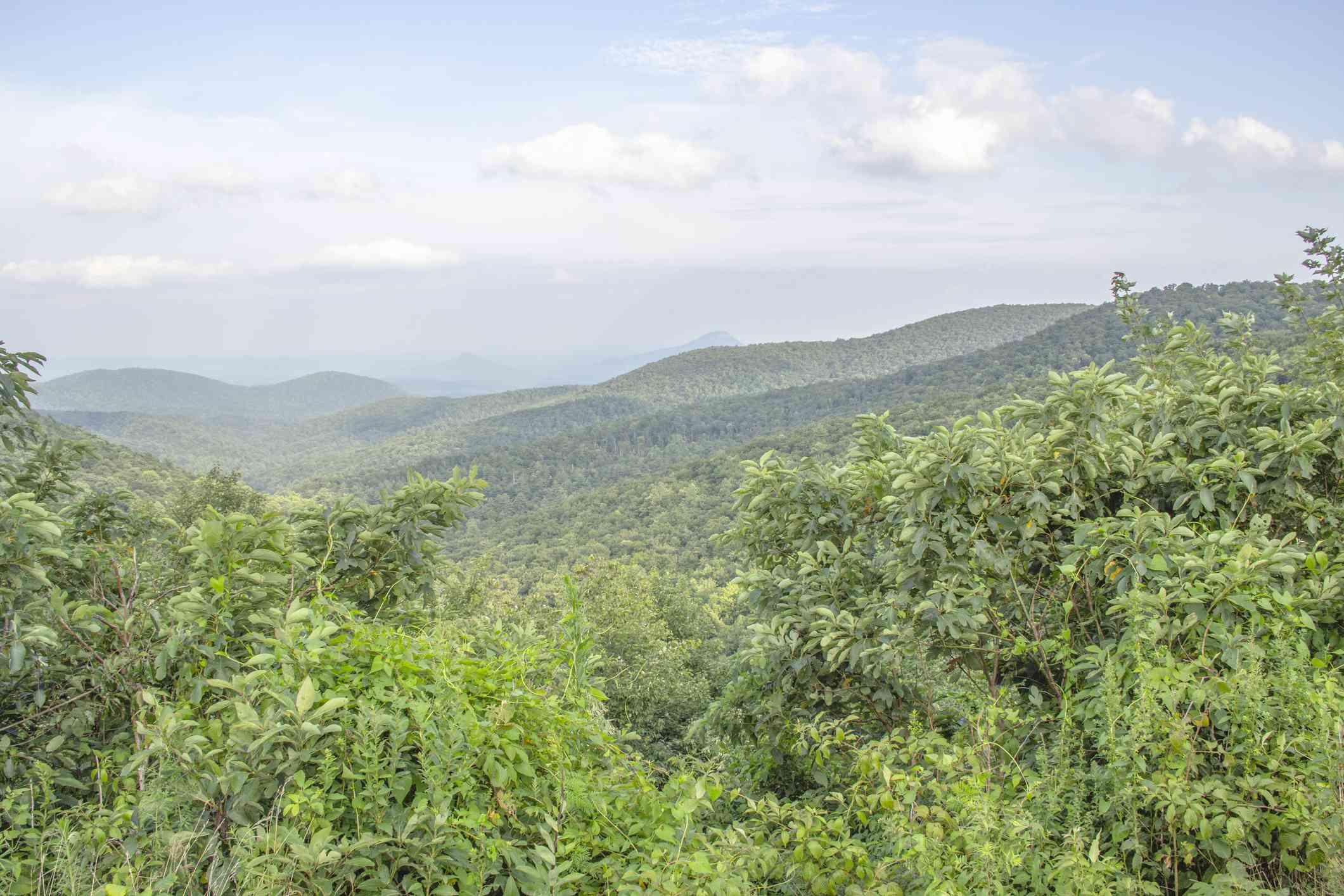 Lush green mountain vista in Chattahoochee National Forest