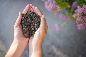 cupped hands hold black compost soil in bare hands with flowers in background
