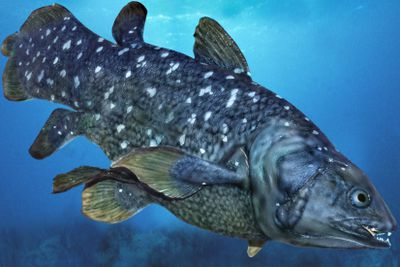 Large blue grey fish with greenish fins and white markings swimming downward in ocean