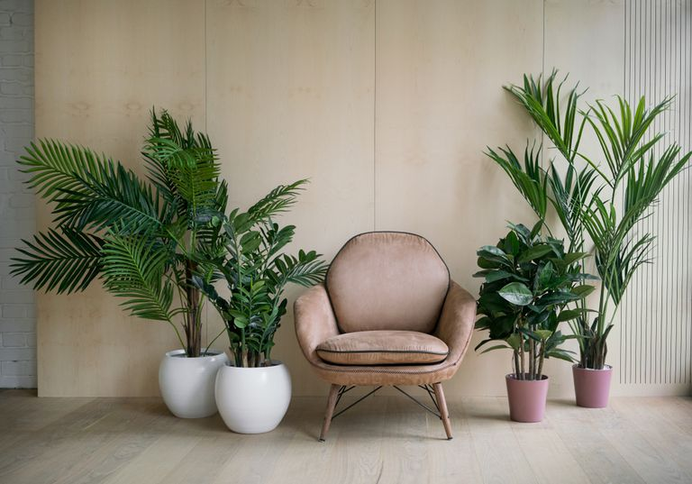 houseplants and a chair