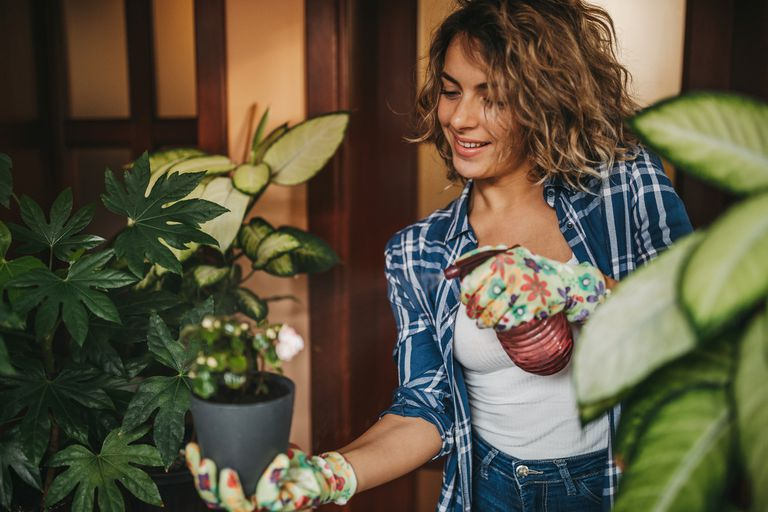 Young woman spraying houseplant with water