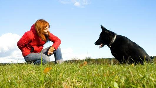 10 mejores videos para entrenar a tu perro