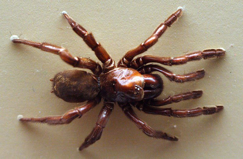 World's Longest-Lived Spider Died at the Ripe Old Age of 43