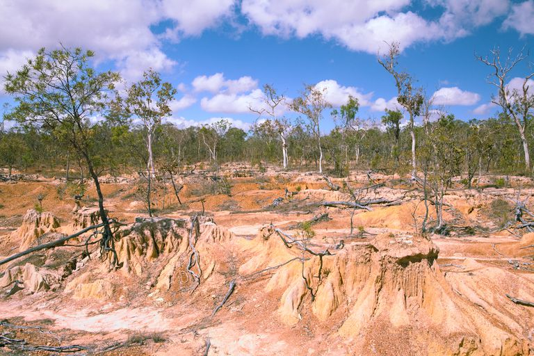 A landscape of dying trees and eroded soil sits under a fair sky.