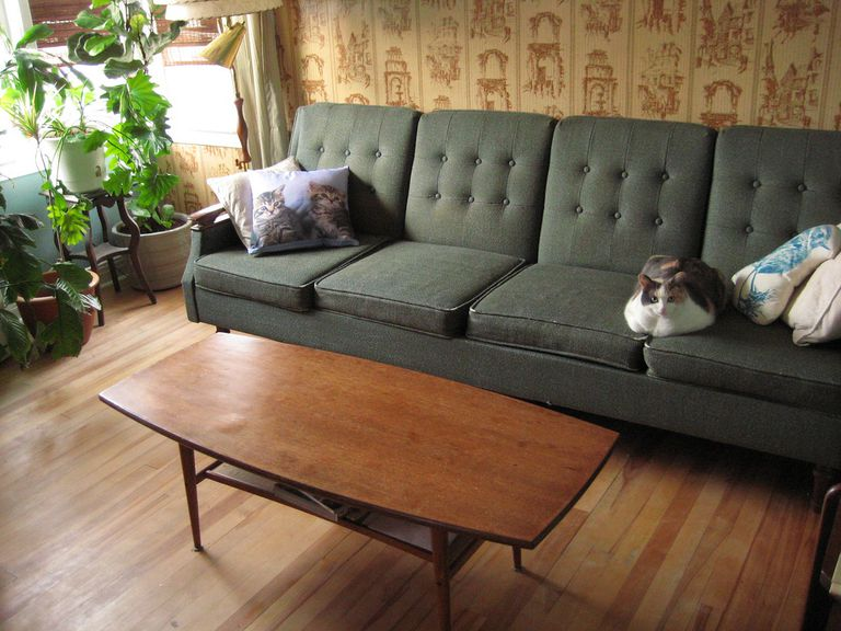 Kitty on couch