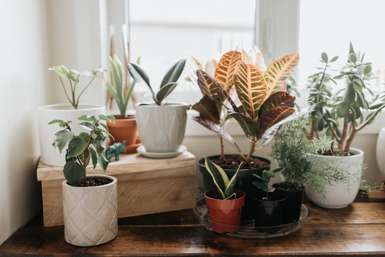 A windowsill with several varied houseplants in small pots on a wood surface