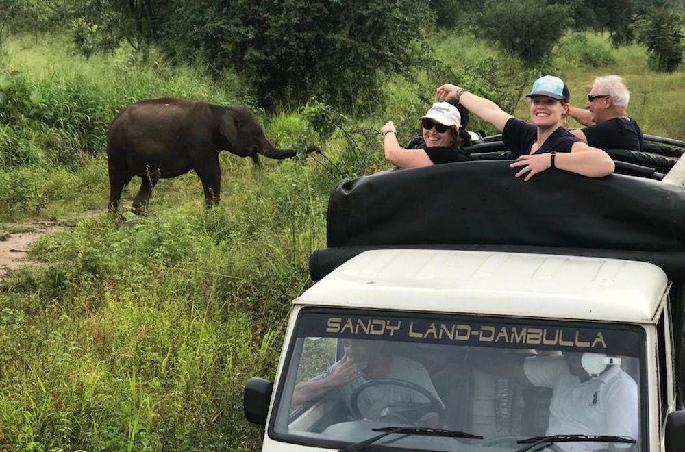 elephant safari in Dambulla