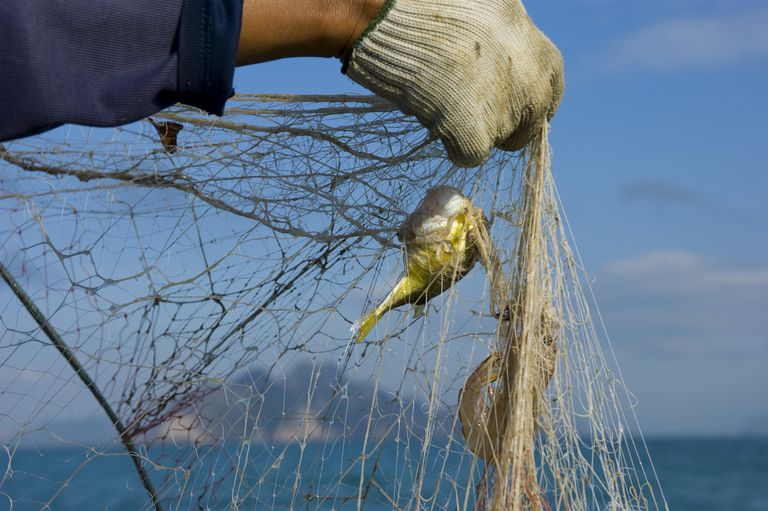 A person holding up a fishing net with fish attached.
