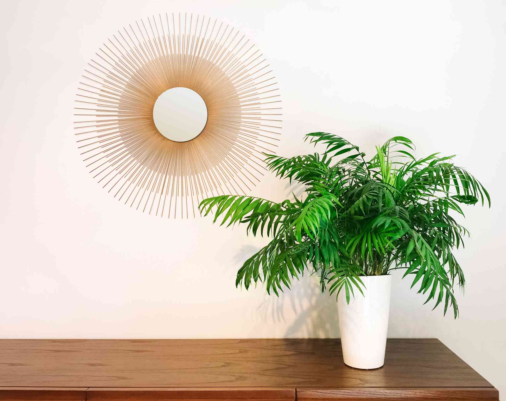 Parlor palm in a pot on a dresser