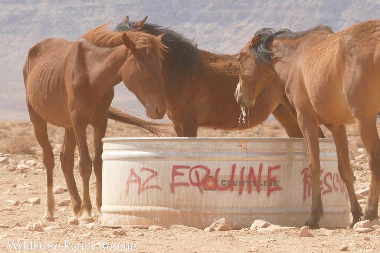 Voluntarios salvan caballos moribundos en tierra navajo