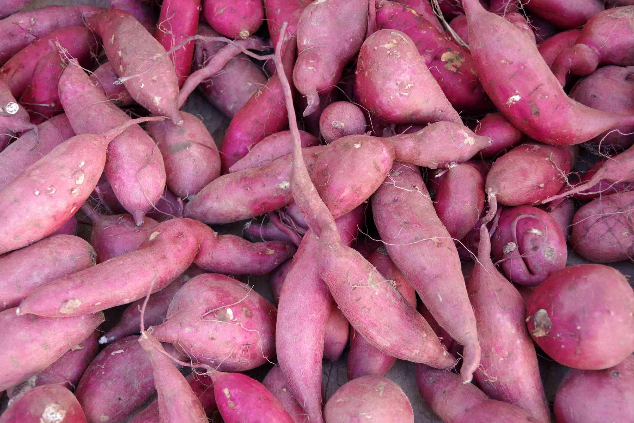 pile of purple-pink Japanese sweet potatoes