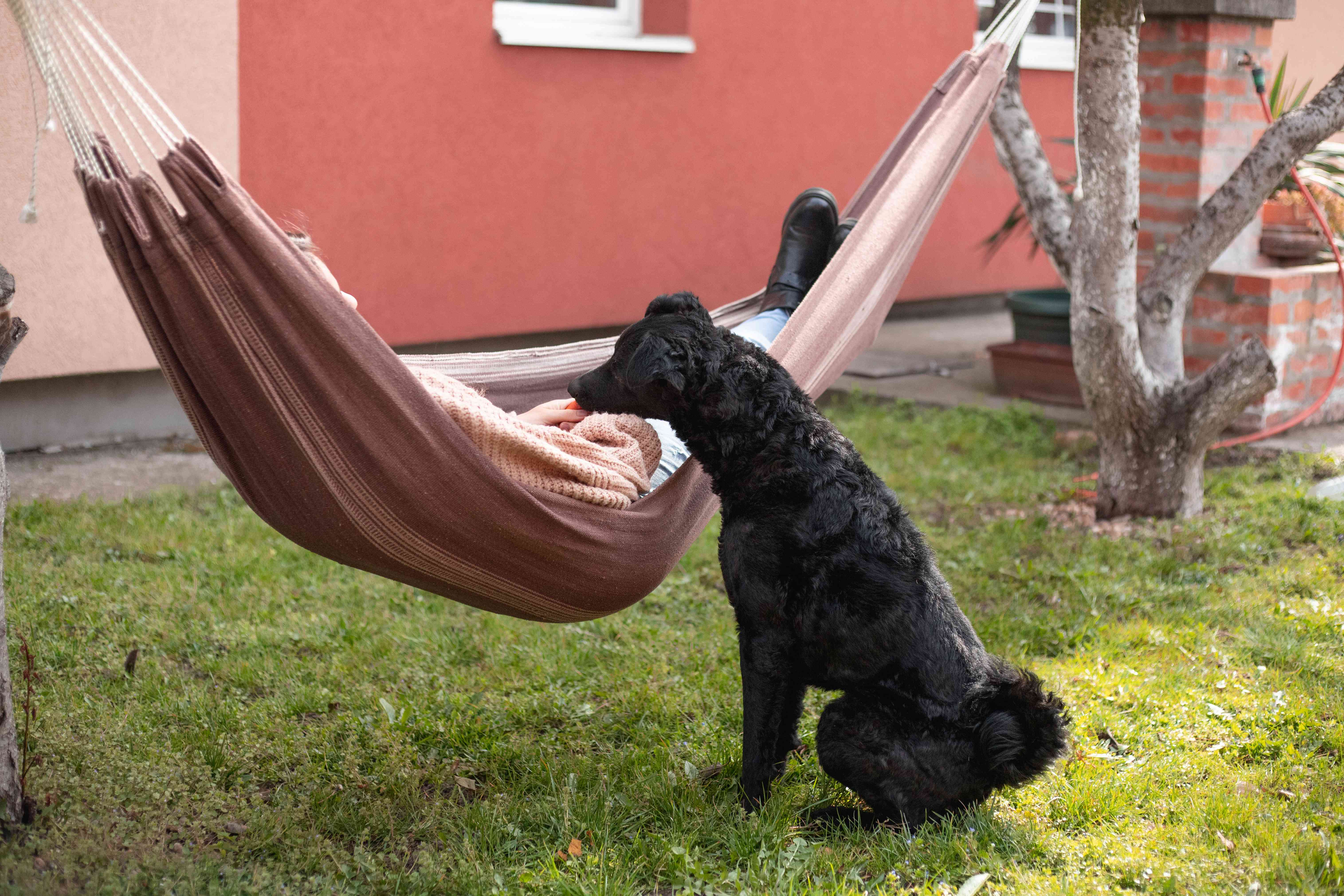 person swings in hammock while black dog sits patiently next to them