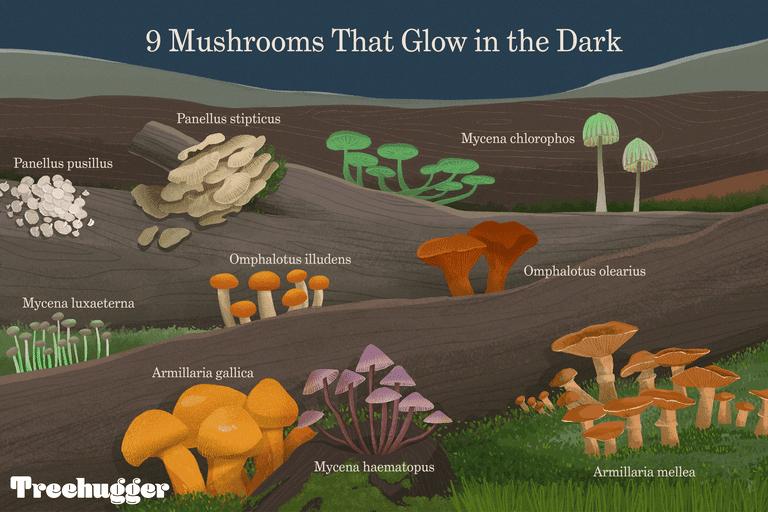 9 mushrooms that glow in the dark