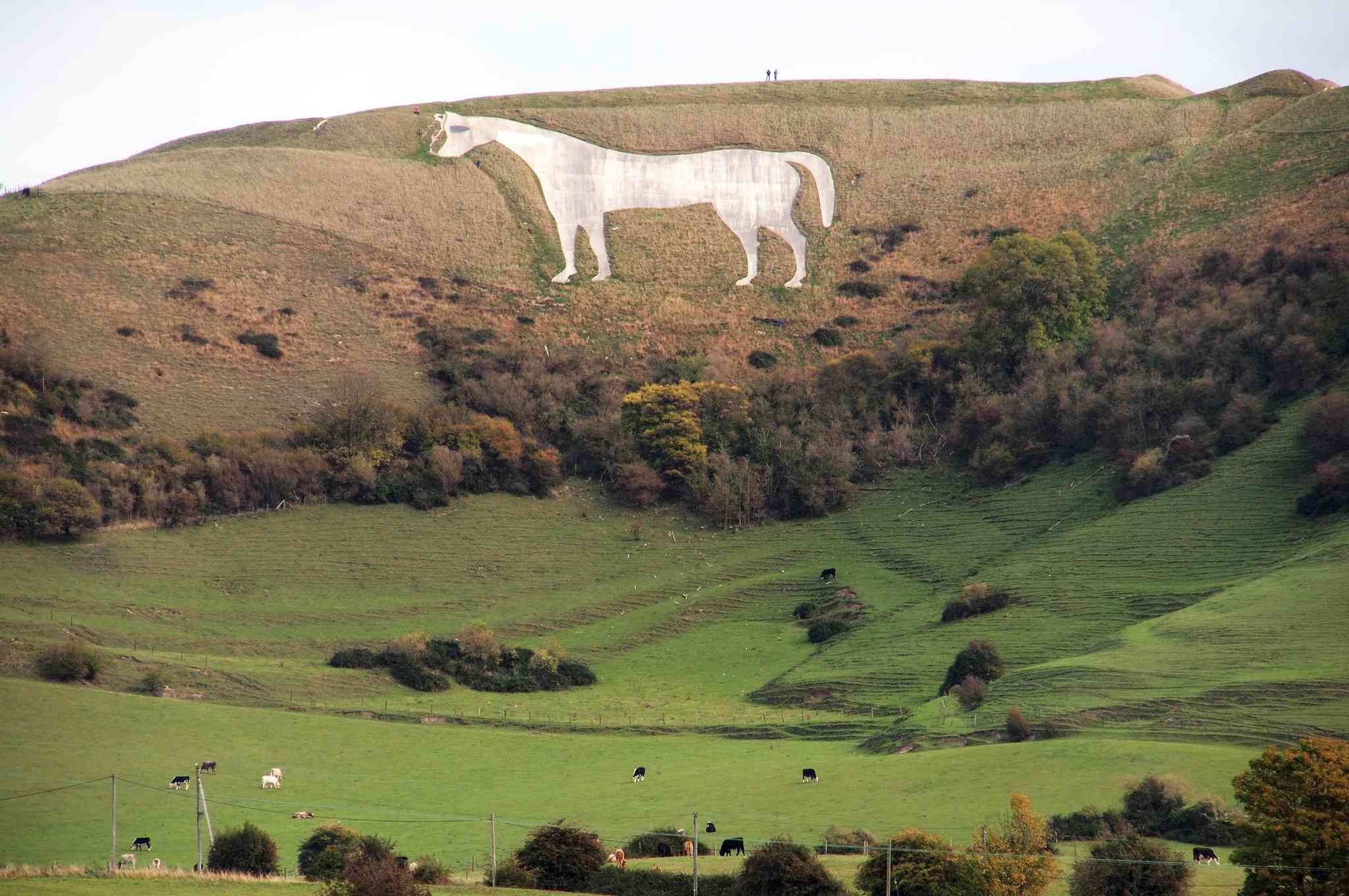 Aerial view of Westbury (or Bratton) White Horse on a hill where the grass has turned brown with green rolling hills and trees in the foreground beneath a cloudy sky