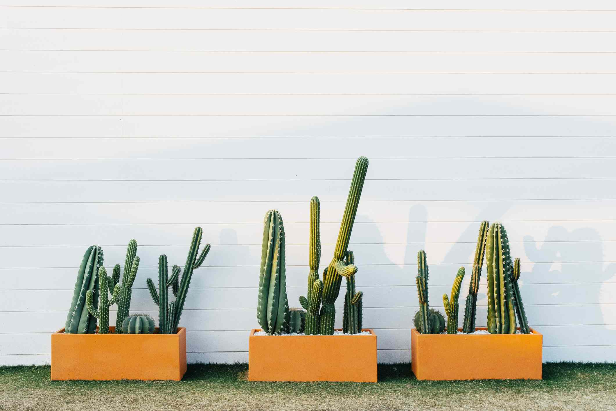 Three Cactus plant boxes against a Mid Century Modern-style white brick wall, in a confined urban space, home garden idea