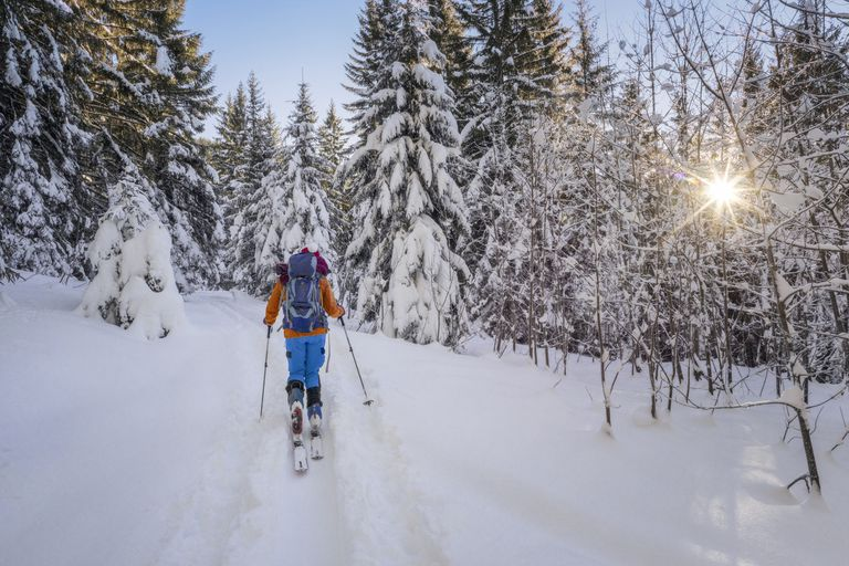 A backcountry skier in the woods with sun shining through trees.