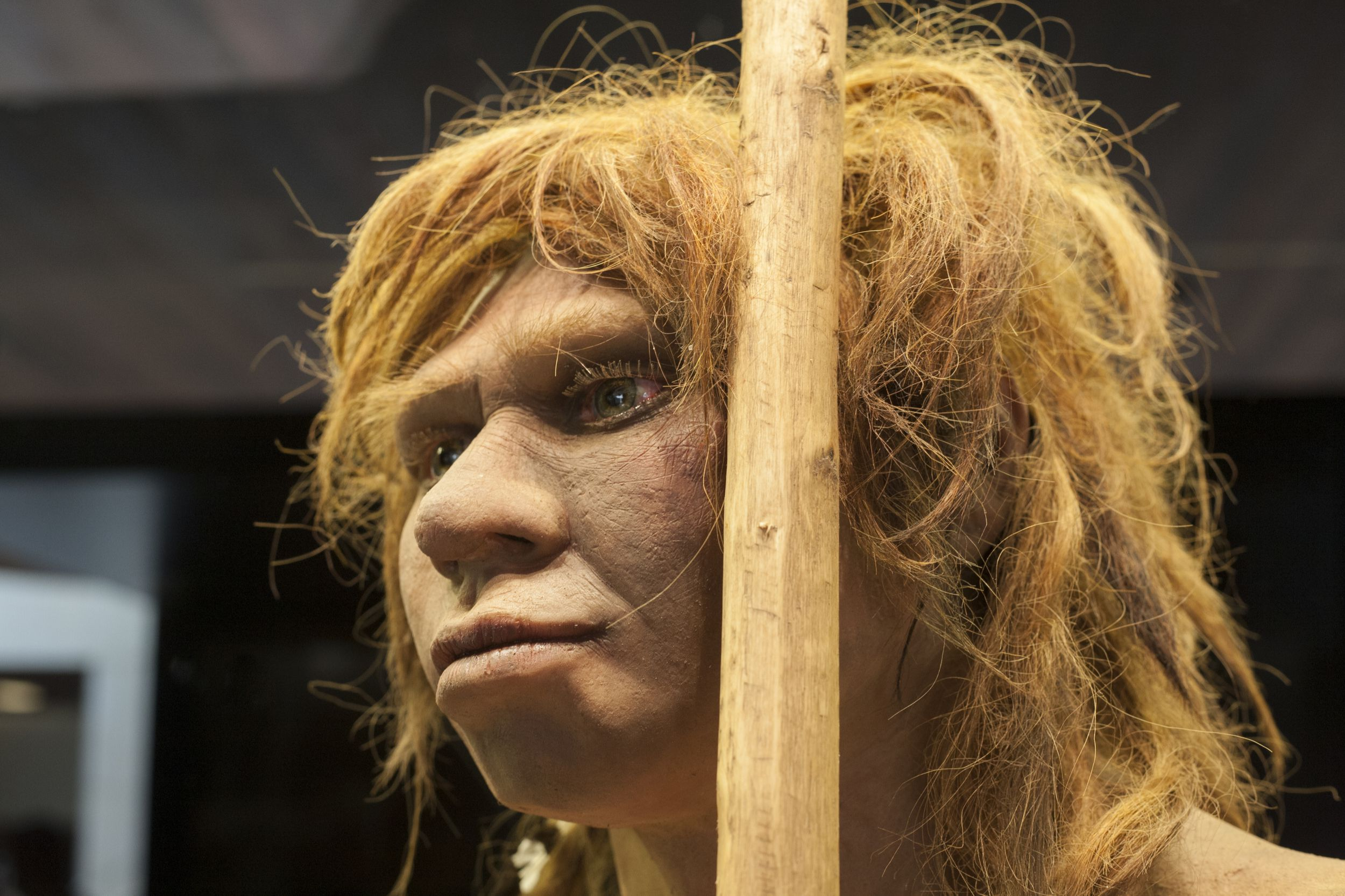 This Ancient Girl Was Half Neanderthal and Half Denisovan