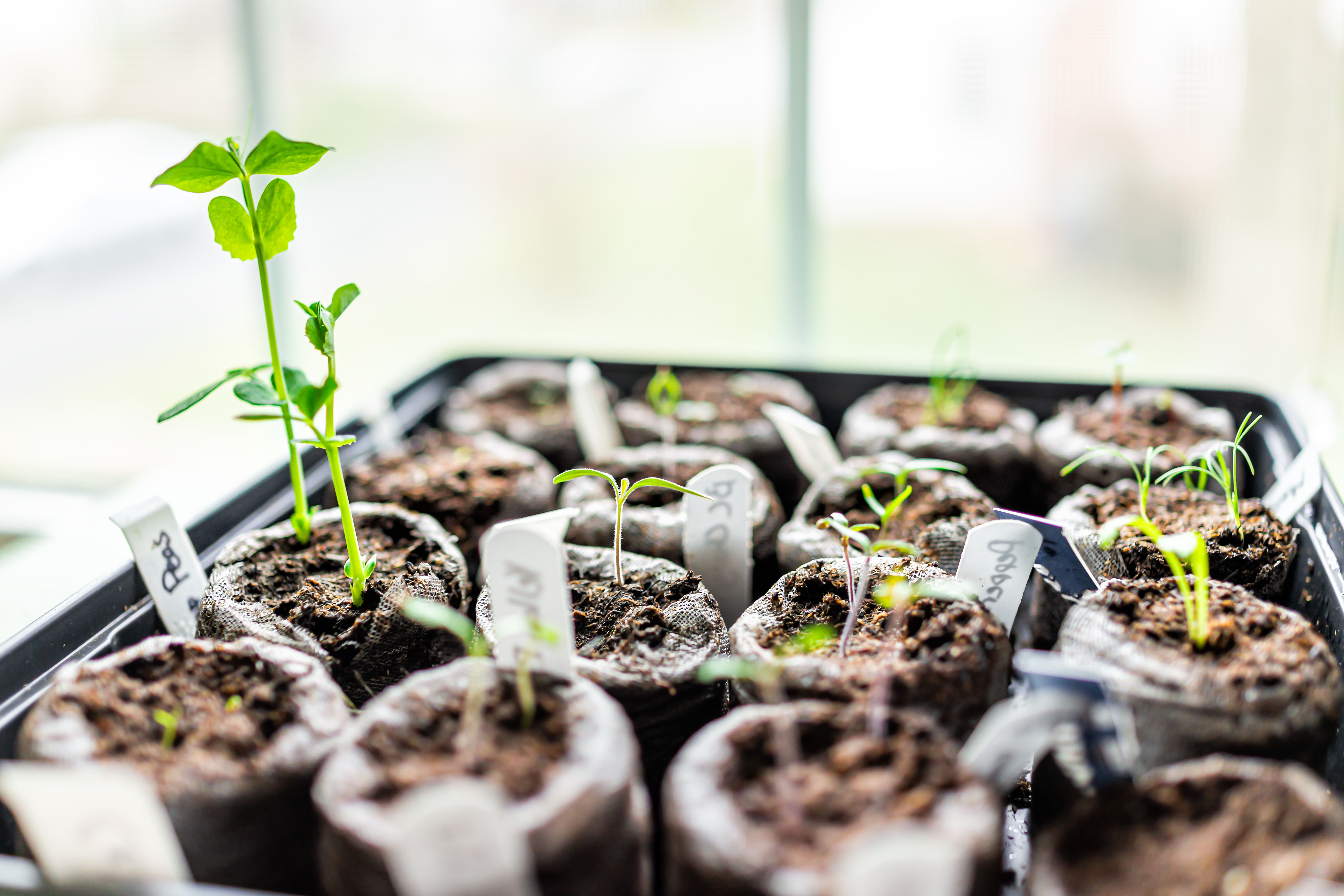 What You Need to Germinate Seeds Successfully