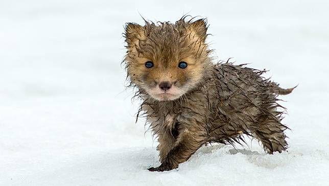 Fotógrafo encuentra resplandor en la vida silvestre de la tundra ártica