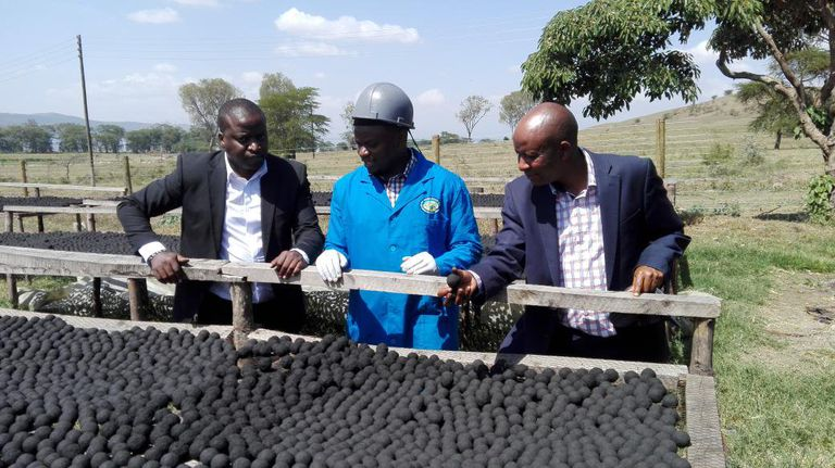 En Kenia, las briquetas secas de caca sirven como combustible limpio para cocinar