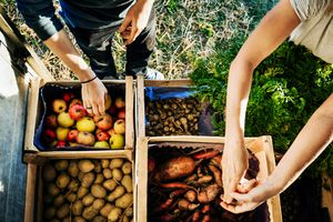 Urban Farmers Organising Crates Of Fruits And Vegetables On Truck