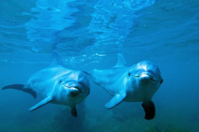 two dolphins looking at the camera underwater