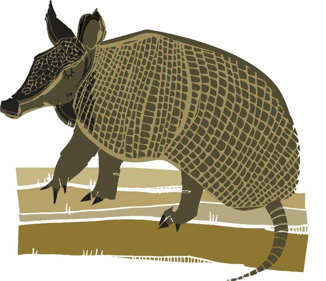 An illustration of an armadillo