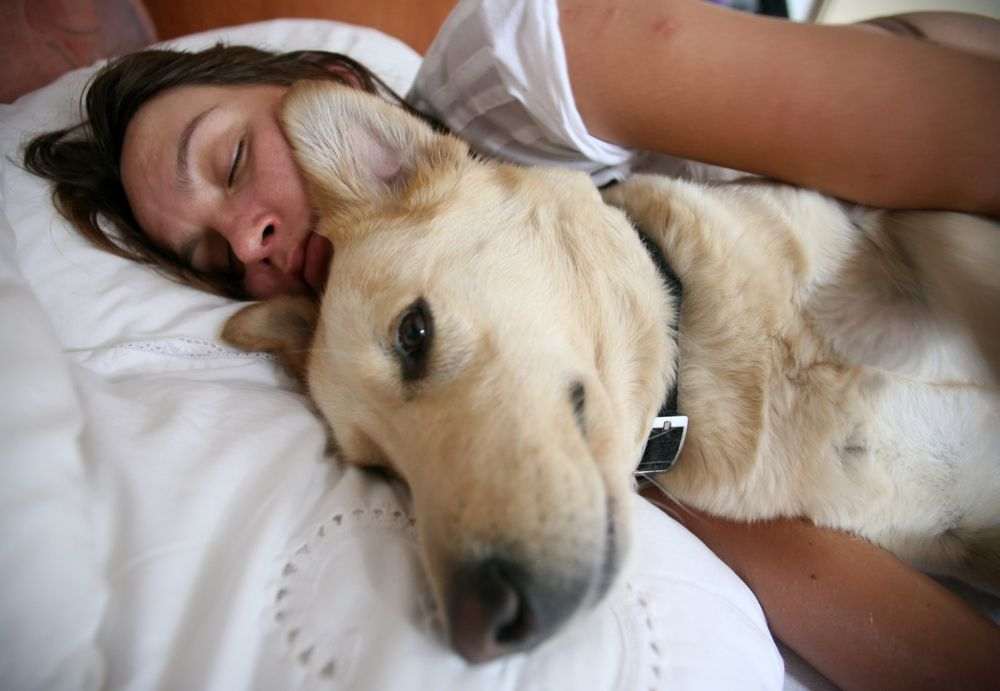 huge dog sleeping in bed with woman
