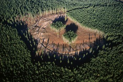 Aerial view of selective logging in Canada