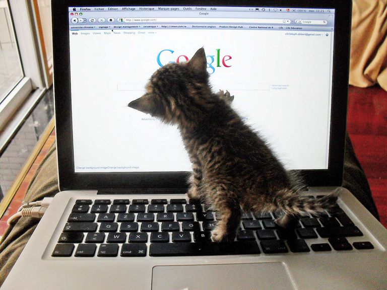 Why Cats Rule the Internet