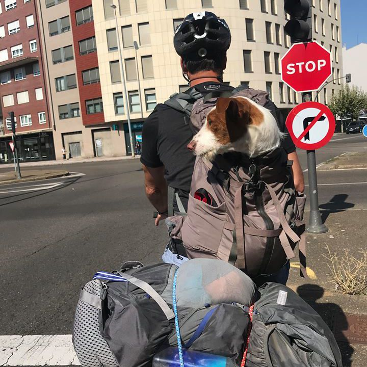 A dog looks out from a backpack