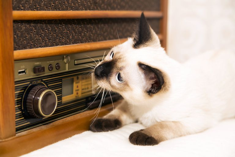 Cat with head turned, sitting in front of a radio