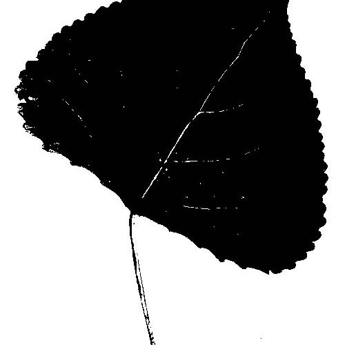 Silhouettes Cottonwood Leaf