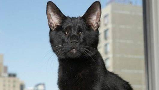 Homer, el gato ciego que inspiró a un bestseller, ha muerto