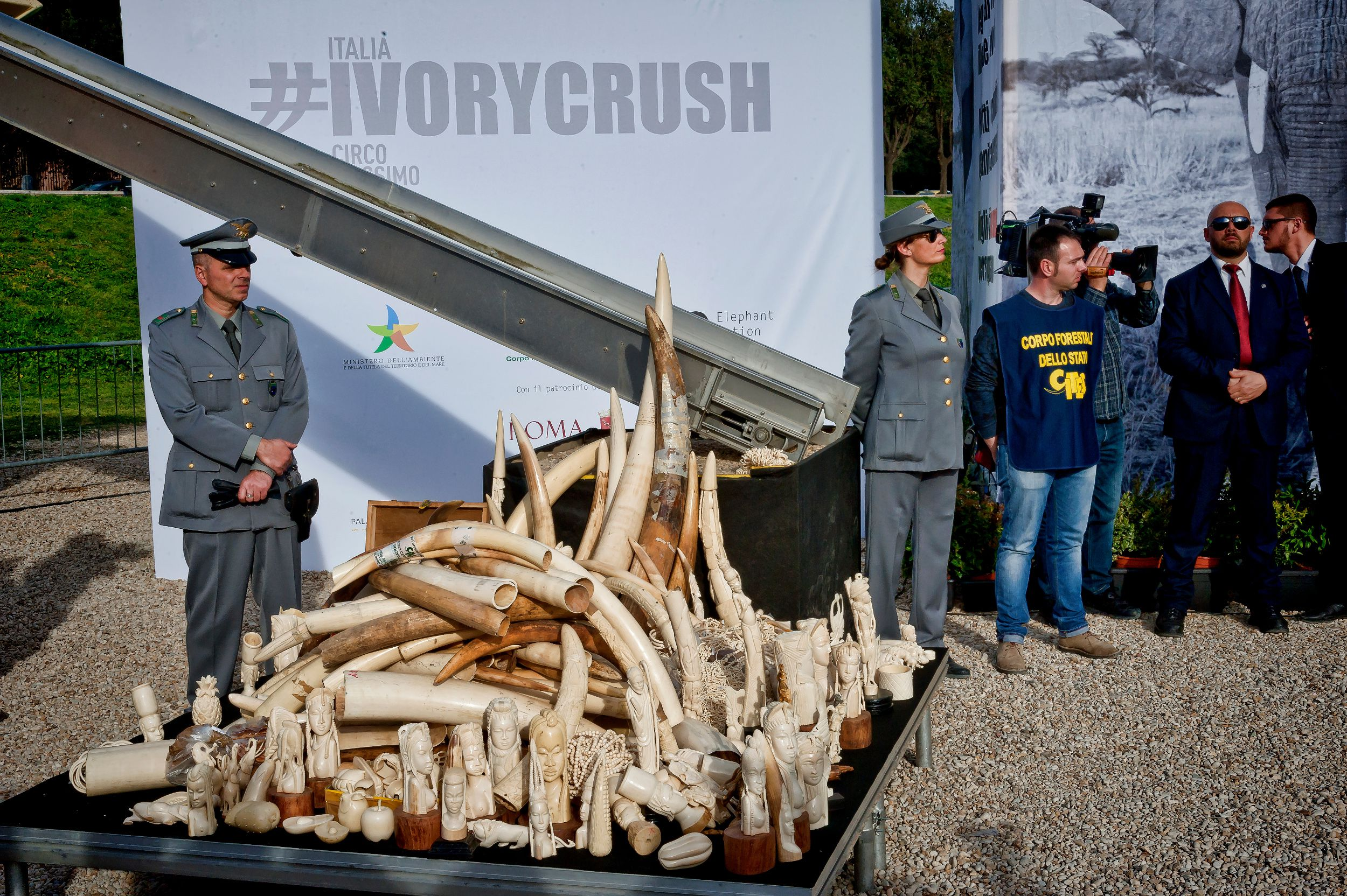 A stack of ivory and ivory sculptures are displayed before the first public ivory crush in Romes ancient Circus Maximus on March 31, 2016 in Rome, Italy.