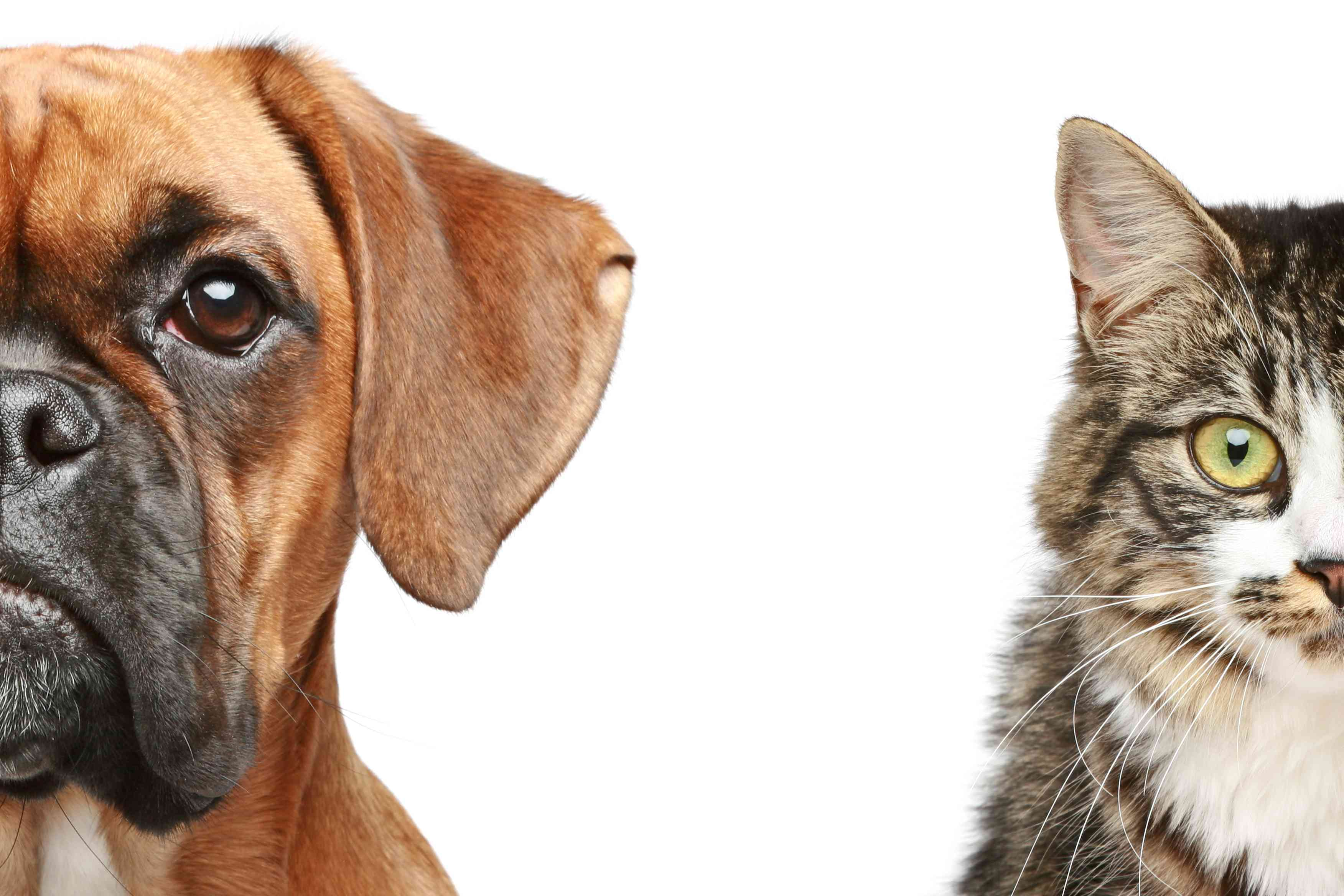 Close-up of dog and cat side by side