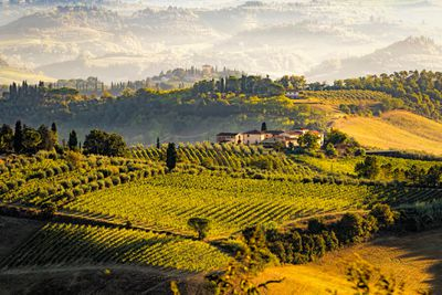 Scenic view of agricultural fields in Volterra, Tuscany