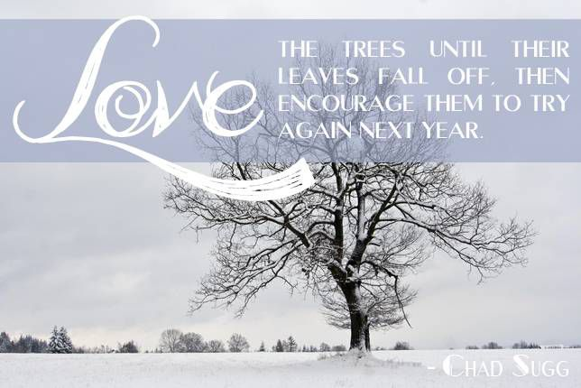 Love the trees until their leaves fall off, then encourage them to try again next year. Chad Sugg