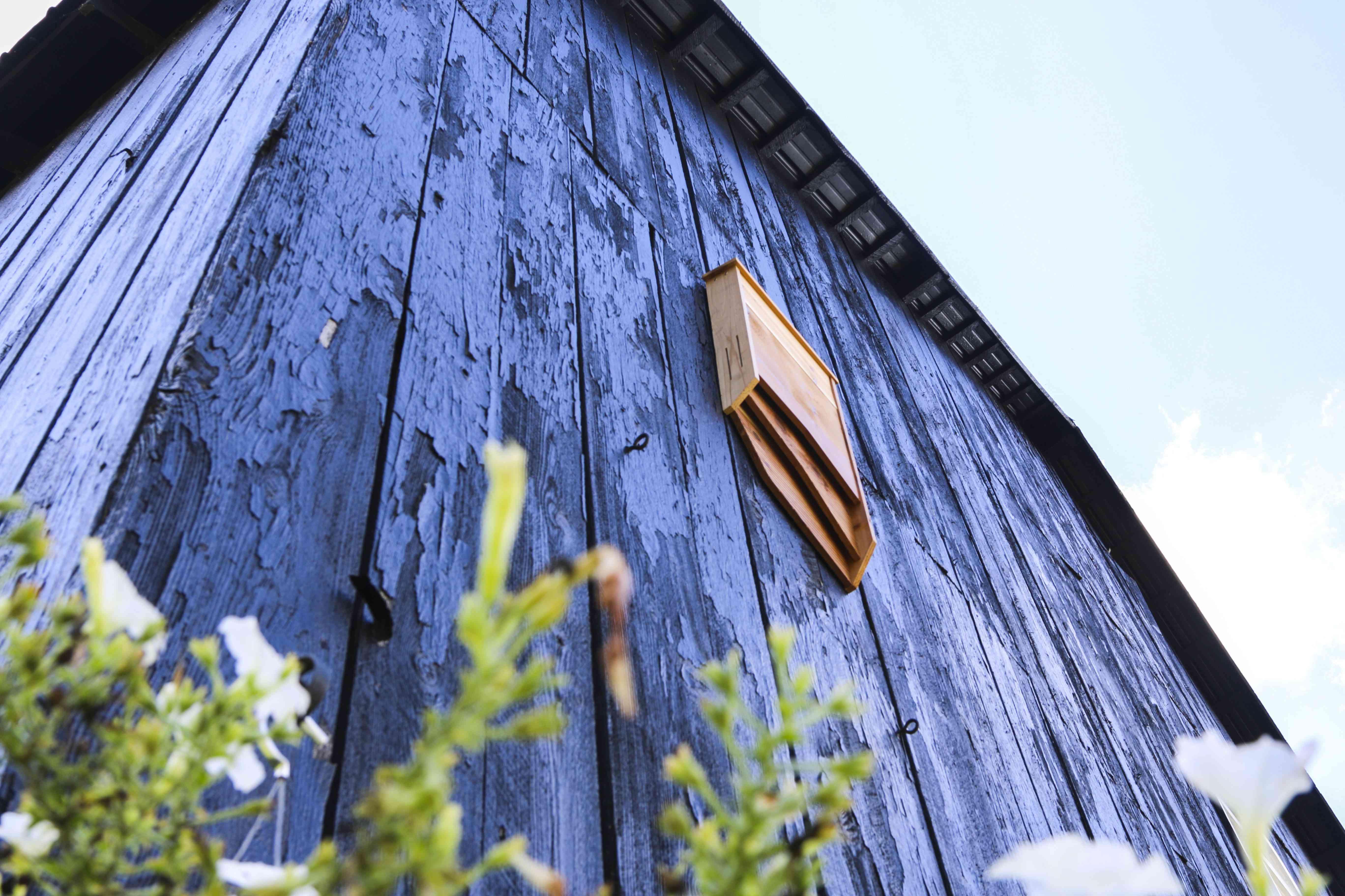 BatBnB bat house on side of a barn